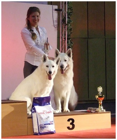 White shepherds Gabe and Rokee winnig BIG-3 in show ring