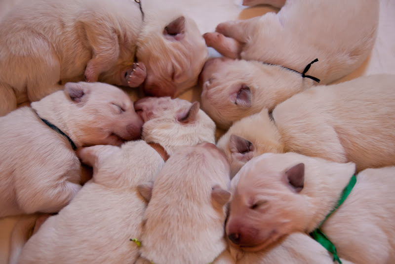 Puppies K litter