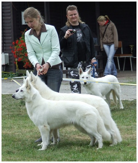 White shepherds Rokee and CoCo